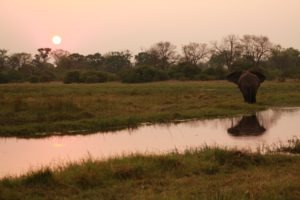 britta safari elephant sunset
