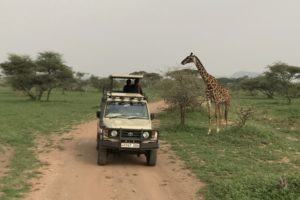 kili trip corporate safari
