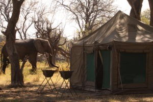 Botswana Mobile Safari Elephant in camp