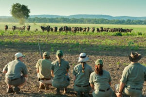 Ecotraining trails guide buffaloes