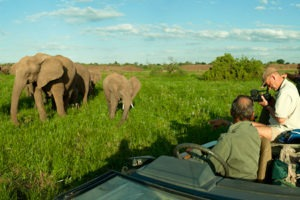 Ecotraining wide angle banner elephants car