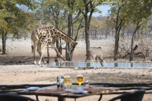Ongava Tented Camp Waterhole