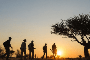 Tuli Botswana sunset walking safari