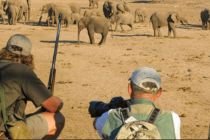 Tuli botswana walking safari elephants on foot