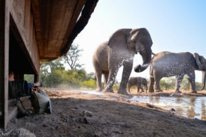botswana mashatu photo hide safari