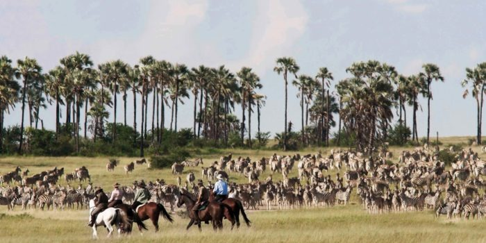 camp kalahari migration horse riding