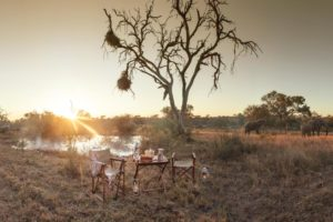kings camp timbavati coffee waterhole
