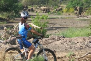 mashatu tented camp cycling