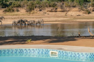 mchenja camp pool elephants