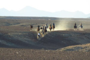 namibia horse riding adventure