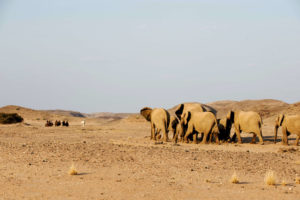namibia horse riding elephant encounter