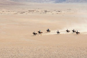 namibia horse riding gallop