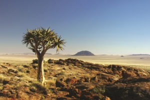 namibia photo safari namib rand