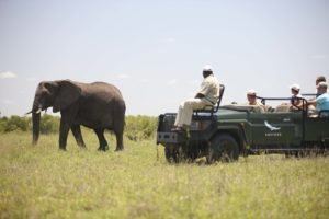 ngala tented camp elephant gamedrive