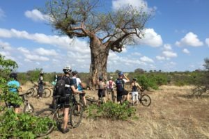 northern tuli botswana cycling safari baobab