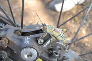 northern tuli botswana cycling safari grasshopper