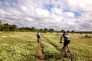 northern tuli botswana cycling safari landscape flowers