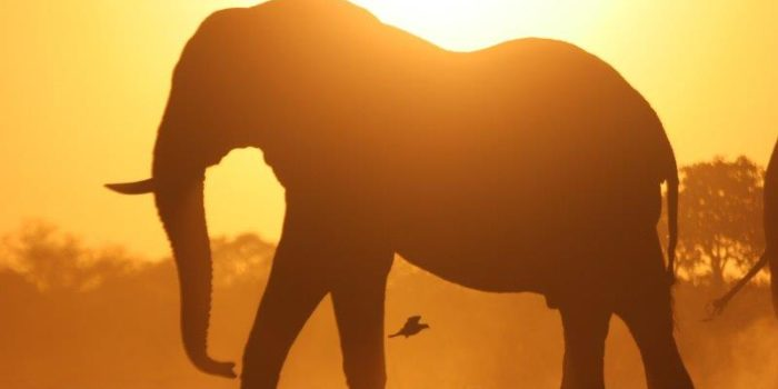 okavango delta bush skills training elephant sunset