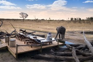 somalisa expeditions hwange elephant pool far