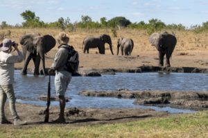 somalisa expeditions hwange walking safari