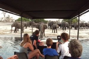 the garden lodge boat elephants chobe