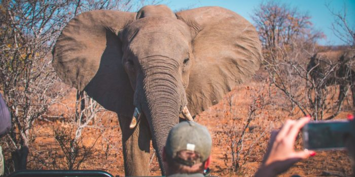 South-Africa-game-drive-elephant
