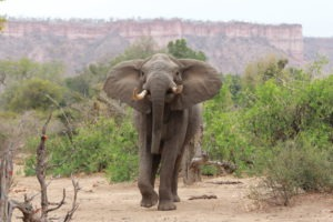 Gonarezhou buchcamps elephant wildlife