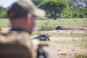 Greater kruger national park hiking tracking on foot safari guide