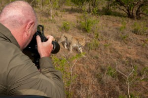Greater kruger national park timbavati photography wildlife safari