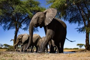 Northern Botswana Chobe Photographic Hide Elephant