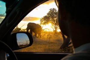 Northern Botswana Slef Drive Safari Elephant Sunset