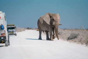 Northern Namibia etosha frank and gesa photography