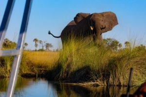 Nothern Botswana Boating Elepehant Safari