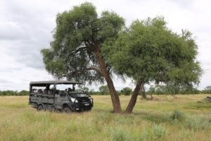 The beast iveco game viewer under tree