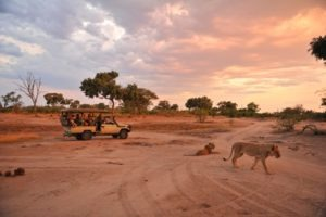 Zimbabwe hwange game drive big 5 lion