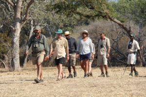 camp zambezi mana pools group walking