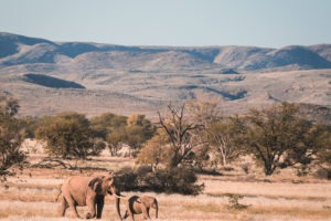 damaraland elephants namibia