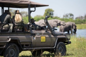 golden africa safaris gamedrive elephant