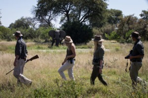 golden africa safaris walk elephant