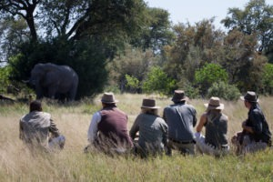 golden africa safaris walking safari elephant