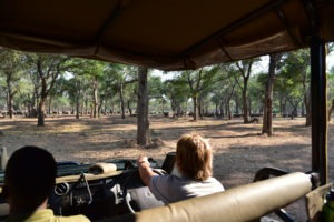lower zambezi tusk and mane game drive