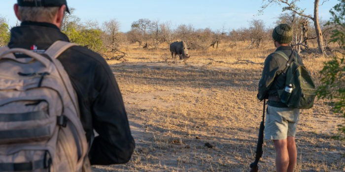 lowveld trails timbavati rhino walking guests