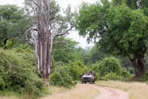 nkozi camp south luangwa game drive