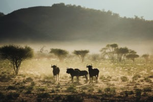 northen namibia erindi jason and emilie wildlife photography