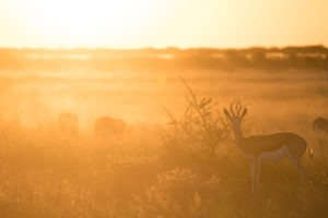 nxai pan springbok sunset