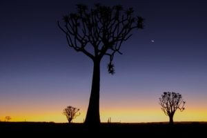 southern namibia quiver tree forest