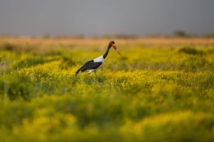 west zambia liuwa plains wildlife photography birds