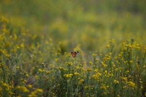 west zambia liuwa plains wildlife photography butterfly flowers