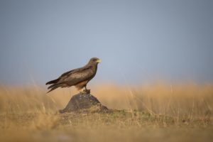 west zambia liuwa plains wildlife photography eagle birding safari