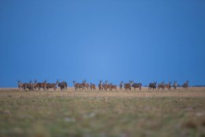west zambia liuwa plains wildlife photography eiland